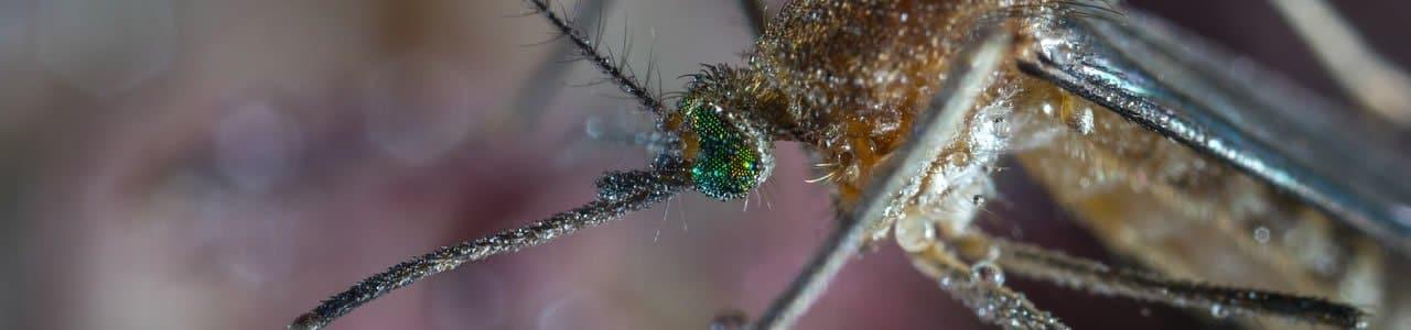 mosquito slider