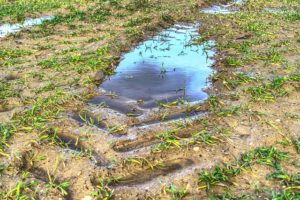 standing water mosquito control
